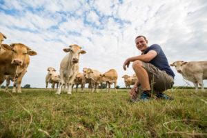 eleveur vaches allaitantes